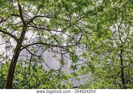 Modern Office Buildings Seen Through Green Leaves. Spring In The Downtown Of Montreal (quebec, Canad