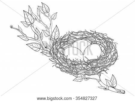 Vector Drawing Of Outline Spring Tree Branch With Bird Nest And Eggs In Black Isolated On White Back