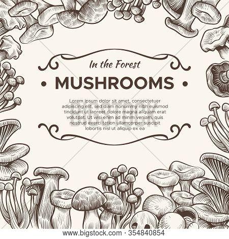 Mushrooms. Hand Drawn Mushroom Champignon, Truffle, Porcini And Chanterelle, Shiitake, Vintage Sketc