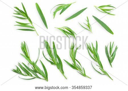 Tarragon Or Estragon Isolated On A White Background. Artemisia Dracunculus. Top View. Flat Lay