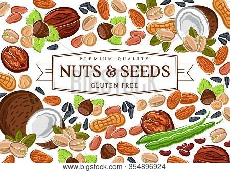 Nuts, Cereal Grains, Beans And Seeds Poster, Gmo Free Healthy Food Vector Peanut, Coconut And Hazeln
