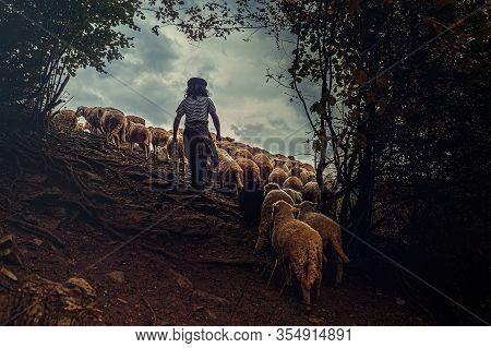 Flock Of Sheep On Beautiful Mountain Meadow.