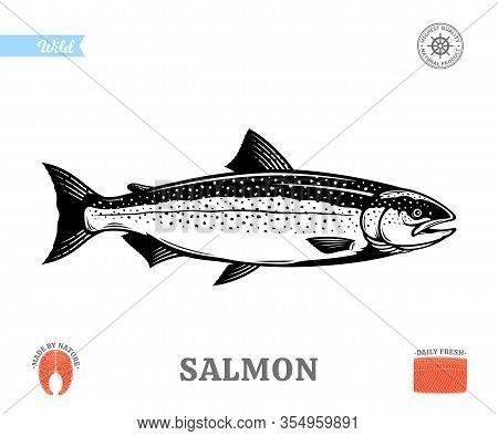 Vector Salmon Fish Illustration