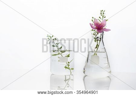 Natural Pink Flower And Green Herb Plant In Glass Flask And Beaker Medical Health Science White Labo