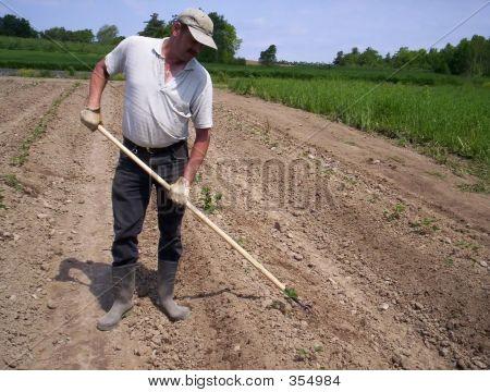 Man Working Field