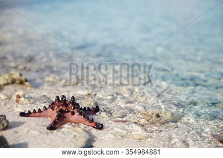 Starfish On Sand With Turquoise Water Background. Live Starfish Close-up.