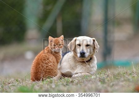 Animal Love Between Domestic Dog And  Cat As A Best Friends