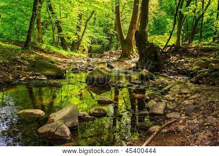 Mountain Stream In The Old Forest