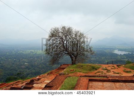 Picturesque View From The Upper Palace Sigiriya, Sri Lanka