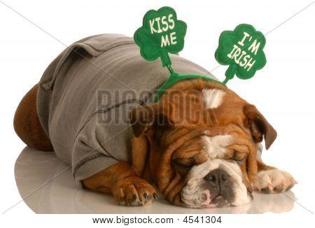 St. Patricks Day Bulldog Sleeping