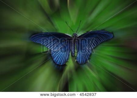 Blue Blur Butterfly
