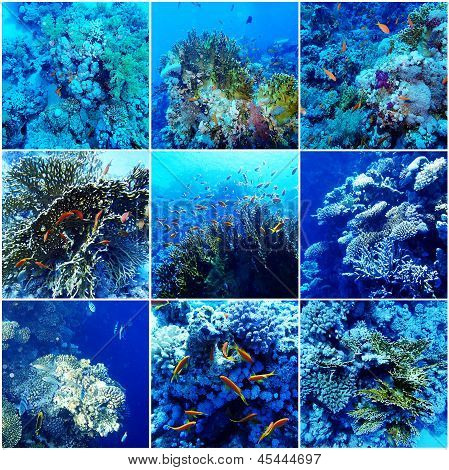 Underwater Sea Collage