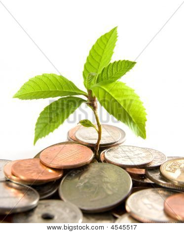 Growing Fund