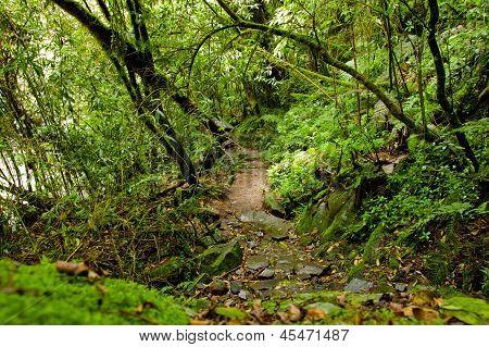 tropical rain forest path