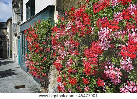 Bright, Red Geraniums In Charming, French Breton Village Street.