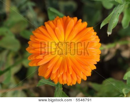 Orange Flower Green Foliage