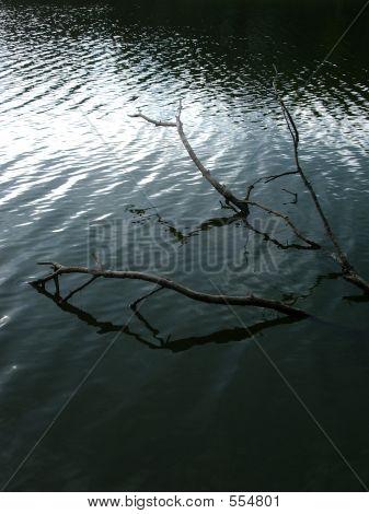 Branch In Lake