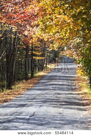 Beautiful Autumn Trail Covered With Trees