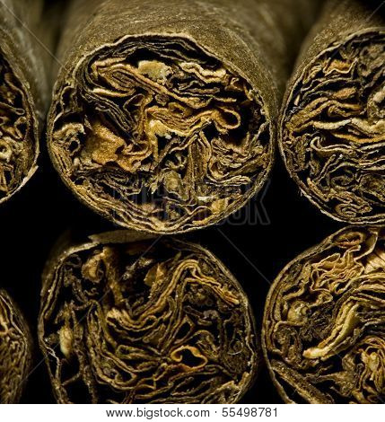Macro Of Brown Dry Cigarettes Or Cigarillo As Addiction Concept