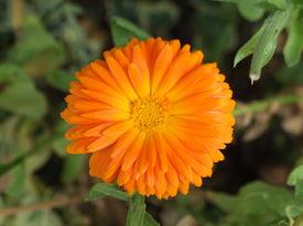 Orange Flower Green Foliage