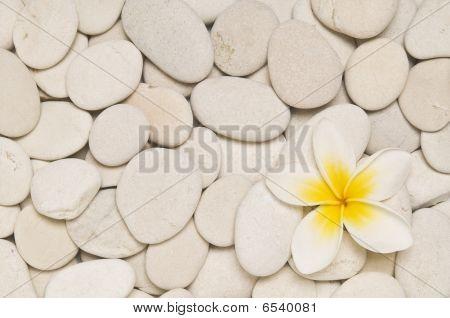 Frangipani And White Pebbles