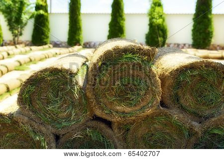 Roll grass on the ready lawn in garden poster
