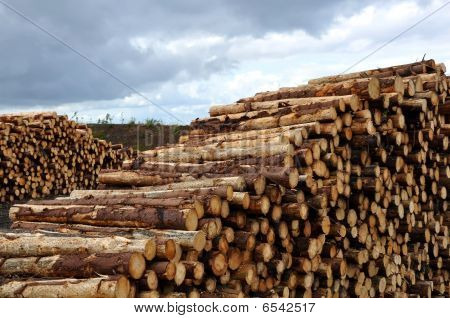 Logs at the windfarm