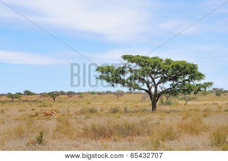Remains Of A Giraffe