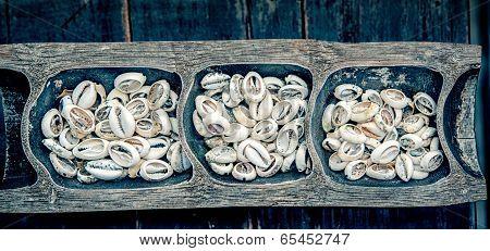 Money Cowry Shells