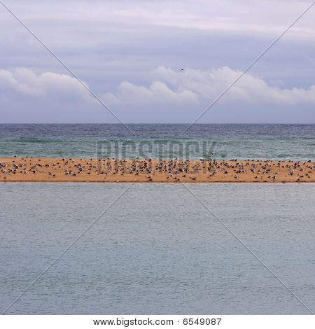 poster of seagulls in a island waiting the storm pass