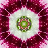 Pink Purple Concentric Wild Flower Center. Mandala Kaleidoscopic design poster