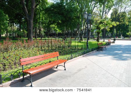 Summer Day In City Park