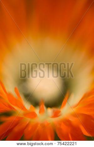 Soft Orange Flower