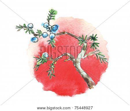Branch of juniper tree and sun, watercolor vector illustration