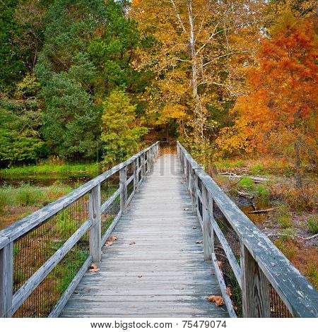 Wooden Bridge Over Creek In Autumn Forest.