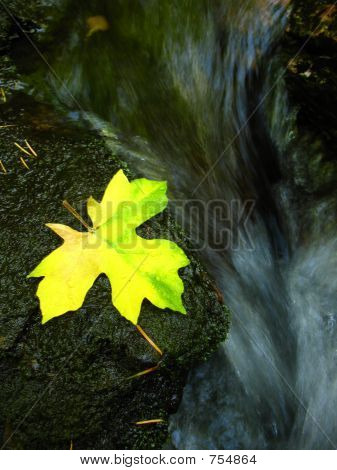 leafy water