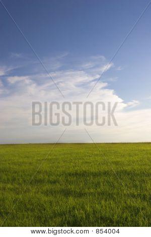 Green grass field and blue sky1
