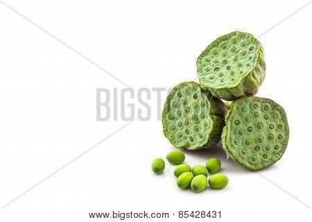 Calyx, Lotus Seeds Green.