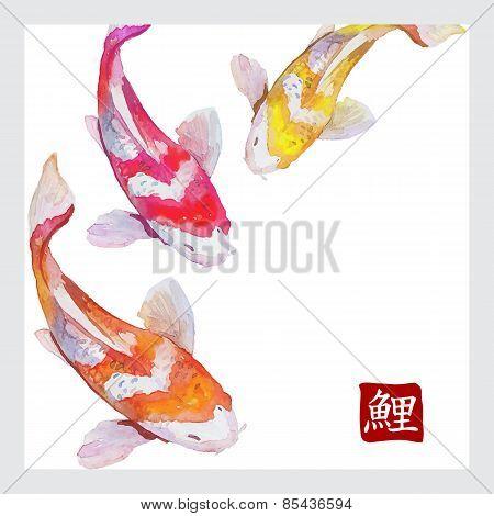 Japanese watercolor carps koi swimming. Calligraphic simbol.
