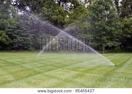 Professionally maintained lawn