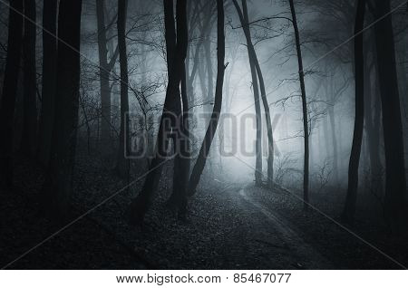 Dark road in mysterious scary forest
