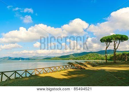 Pine Tree Group On The Beach And Sea Bay Background. Punta Ala, Tuscany, Italy