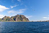 Seagull over sea near norwegian island Skrova poster