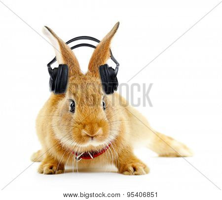Red rabbit with headphones isolated on white poster