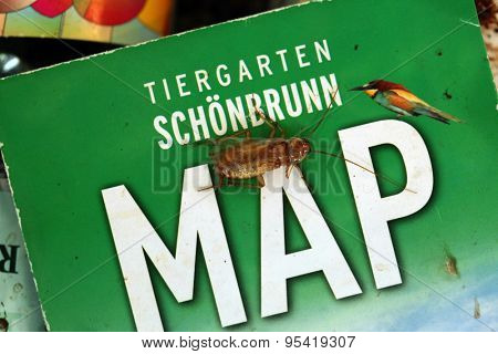 VIENNA, AUSTRIA - JUNE 7, 2015: Turkestan cockroach (Blatta lateralis) on a map of the Schonbrunn Zoo in Vienna, Austria.
