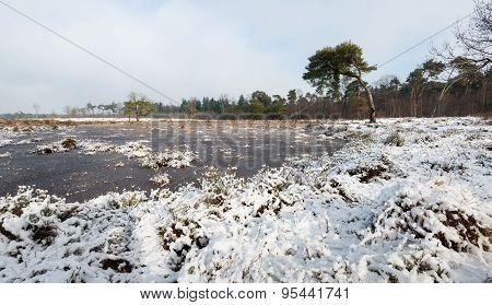 Winter In A Dutch Nature Reserve
