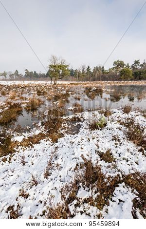 Nature Reserve In Wintertime