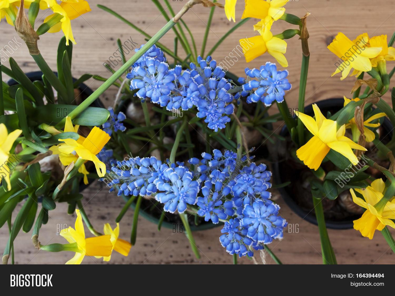Flayt Lay Spring Image Photo Free Trial Bigstock