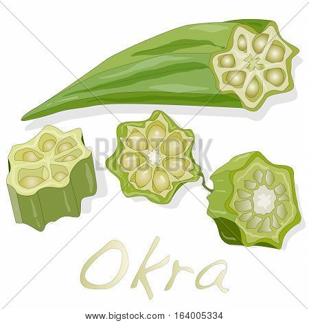 Okra plant illustration isolated on white .