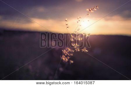 Grass prominent among the blazing sun. background.